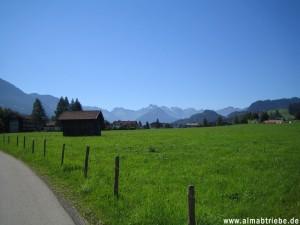 Viehscheid in Buching