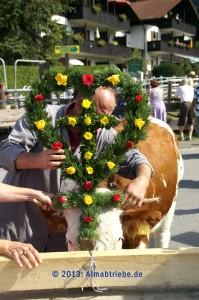 Foto-kuh02-199x300 in Almabtrieb mit Bauernmarkt in Krün 2017