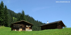 Almabtrieb in Au-Schoppernau im Bregenzerwald, Vorarlberg