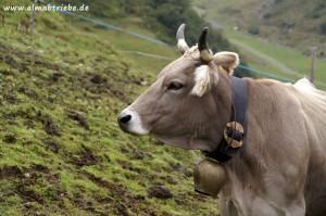 Almabtrieb in Ramsau im Zillertal