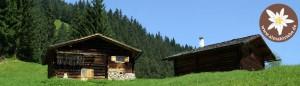 Schafscheid in Gaschurn im Montafon