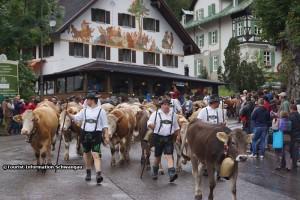 Viehscheid Hohenschwangau 01