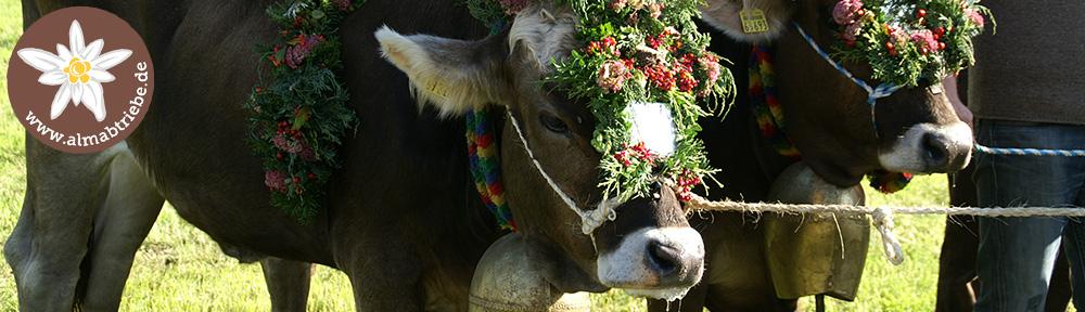 Viehscheid Haldenwang