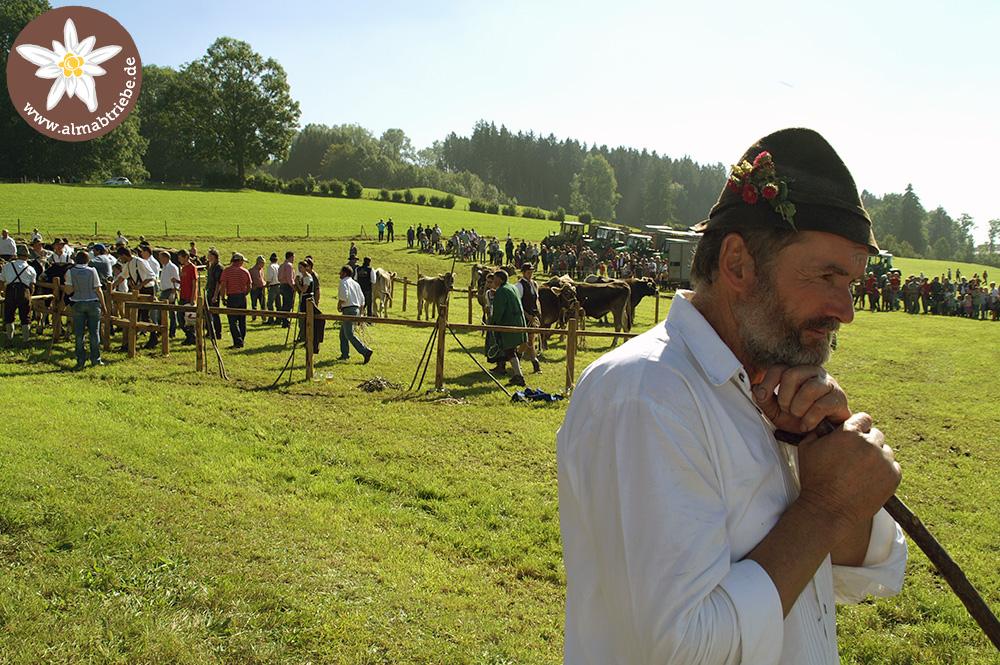Viehscheid-haldenwang in Bilder Almabtrieb / Viehscheid