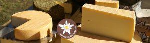 Käse beim Viehscheid in Nesselwängle