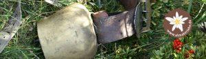Glocke beim Almabtrieb in Hart im Zillertal